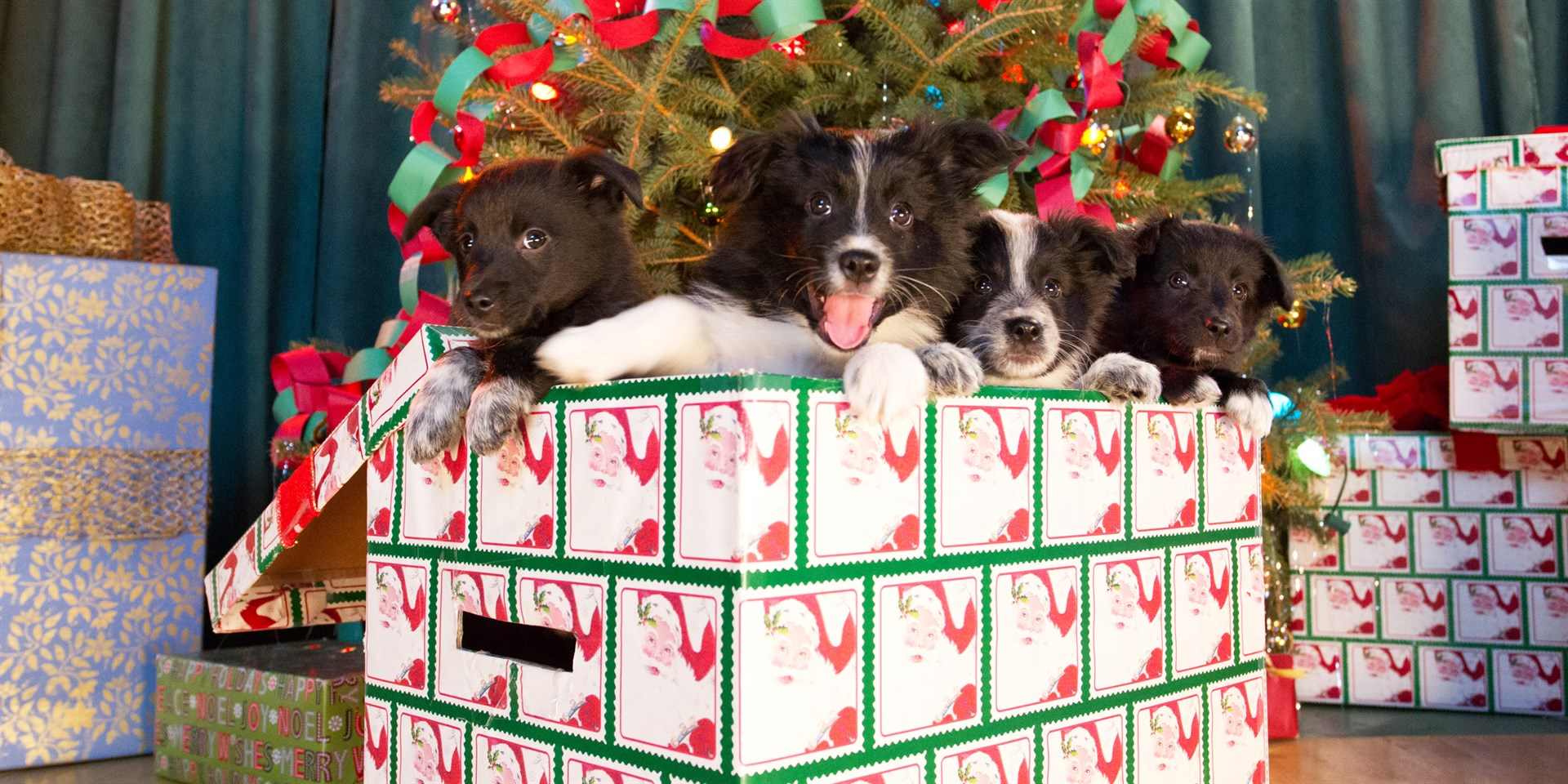 12 Dogs Of Christmas.Buy 12 Dogs Of Christmas Great Puppy Rescue Microsoft